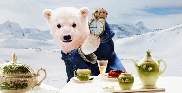 Le temps presse pour les ours